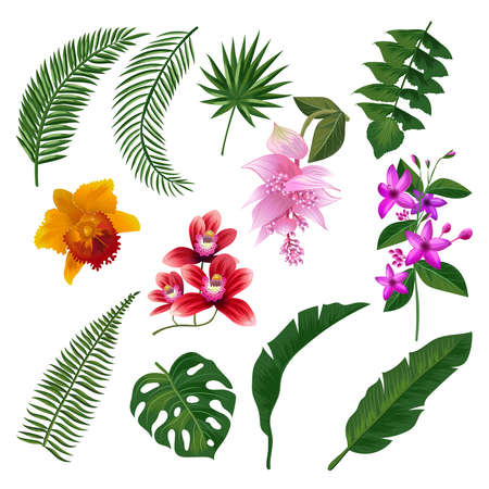 Illustration pour Set of Tropical flowers bouquet. Vector illustration of leaves and branches. Color flower and green plant, summer blossom tropical flower - image libre de droit