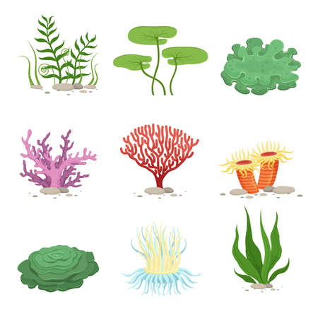 Illustration pour Sea aquatic fauna underwater plants and corals. Vector colorful ocean elements. Marine coral underwater and ocean, nature fauna illustration - image libre de droit