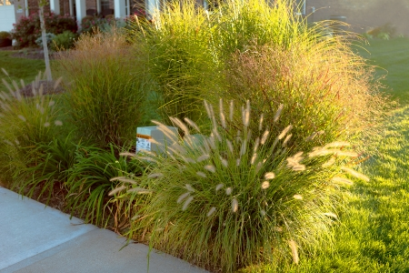 Neighborhood beautification, hiding underground power line and telecommunication boxes with giant ornamental grasses in the neighborhood