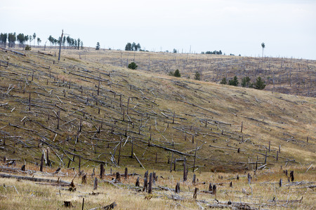 Decimated deforested hillside slopes with the remnants of felled tree trunks in a conceptual image of loss of trees and forests affecting the ecology