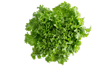 Head of fresh crispy leafy green Californian lettuce isolated on white viewed from above to be used as a healthy salad ingredient and garnish