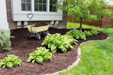 Garden maintenance in spring doing the mulching of the flowerbeds to keep down weeds and retain moisture in the soil