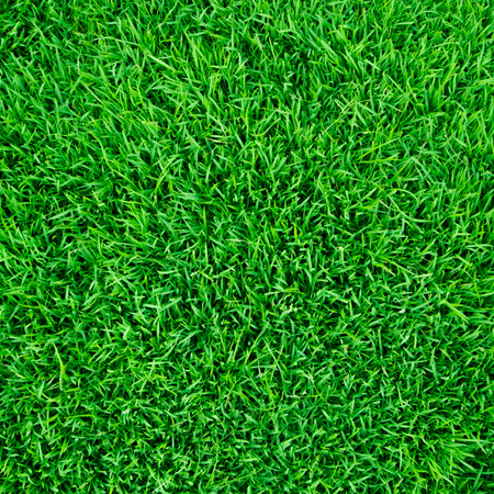 Green grass background or the naturally walls texture Ideal for use in the design fairly.