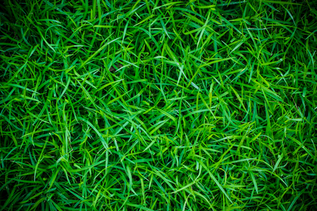 Green grass vignette background or the green nature wall texture Ideal for use in the design fairly.