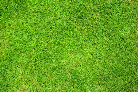 Green grass floor background or the naturally walls texture Ideal for use in the design fairly.