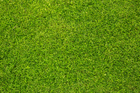 Green artificial grass background vignette or the naturally walls texture Ideal for use in the design fairly.