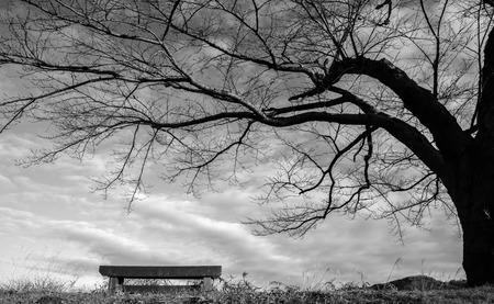 Ookawaphoto160200019