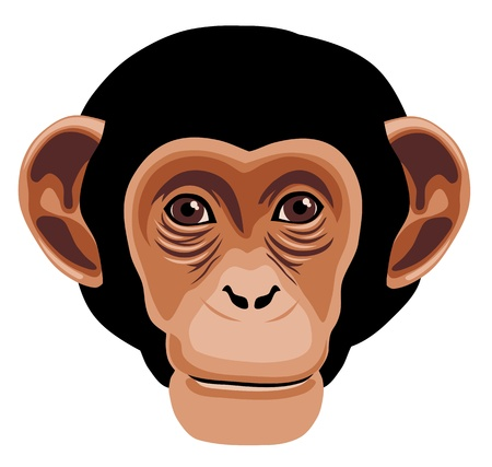 illustration of monkey head cartoon style