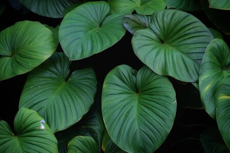 Photo pour Tropical fern leaves growing in botanical garden with green color pattern and dark light background - image libre de droit