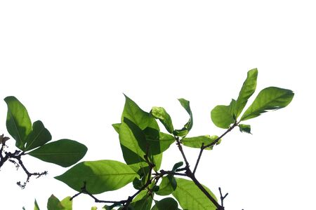 Photo pour Close up tropical plant leaves growing on a wall for green nature backdrop - image libre de droit