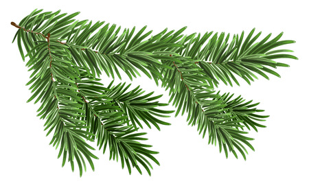 Illustration pour Green lush spruce branch. Fir branches. Isolated on white - image libre de droit