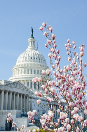 U.S. Capitol building in Washington DC - Spring time