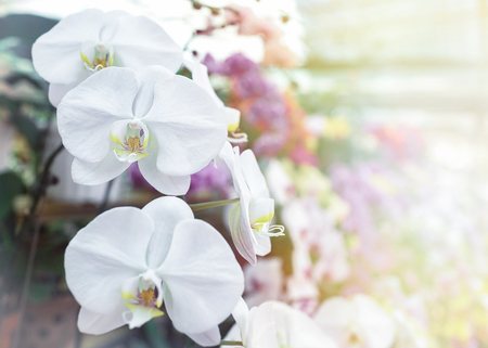 Photo for White fresh orchid in the flower market - Royalty Free Image