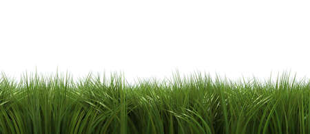 Digitally generated grass isolated on white background