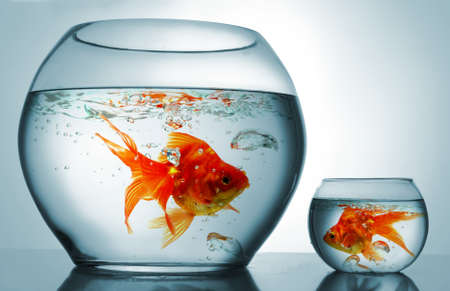 Photo for A big bowl and a small one with goldfish - Royalty Free Image