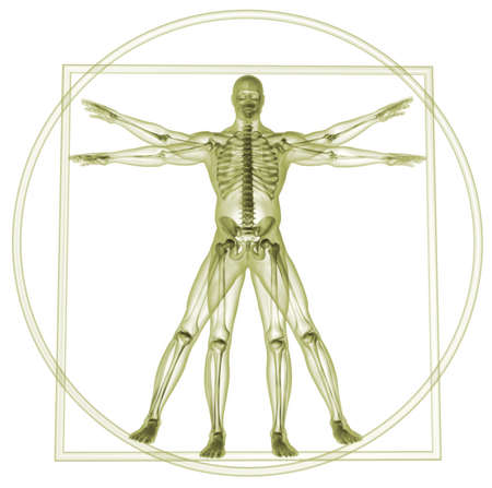 Body and skeleton in vitruvian man  - 3d render