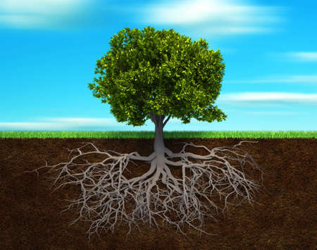 Section in soil showing the root of a tree - 3d render illustration
