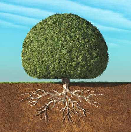 Foto de A perfect tree with green leaves in the shape of sphere with roots underground. This is a 3d render illustration - Imagen libre de derechos