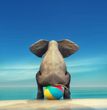 Photo for An elephant on a beach ball on the seashore. This is a 3d render illustration - Royalty Free Image