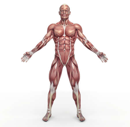 Foto de Male muscular system. This is a 3d render illustration - Imagen libre de derechos