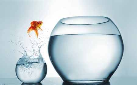 Photo pour Jumping to the highest level - goldfish jumping in a bigger bowl - aspiration and achievement concept. This is a 3d render illustration - image libre de droit