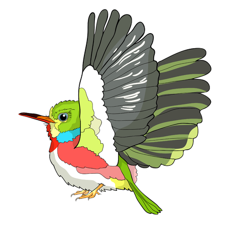 Cuban a Tody Bird exotic vector illustration