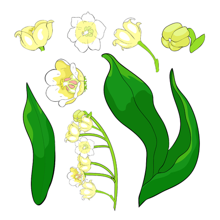 Illustration pour set  flower lily of the valley vector illustration - image libre de droit