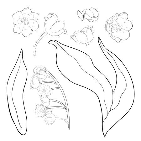 Illustration pour set coloring flower lily of the valley vector illustration - image libre de droit