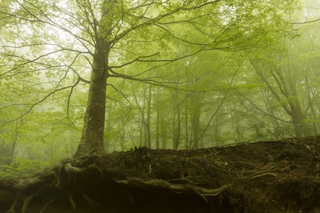 Beautiful forest with fog be