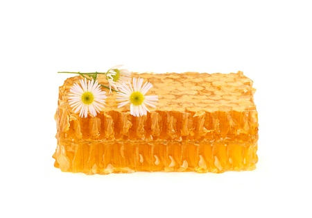 Honey in the comb with a sprig of camomile,isoleted on white background.