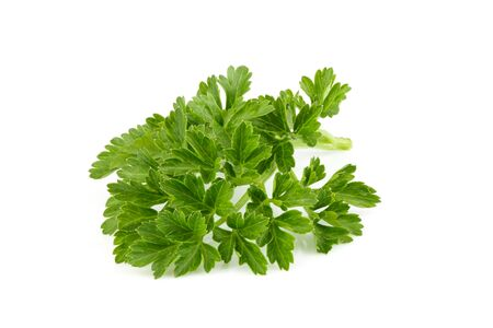 Photo for Fresh branch of parsley close up on white background.  - Royalty Free Image