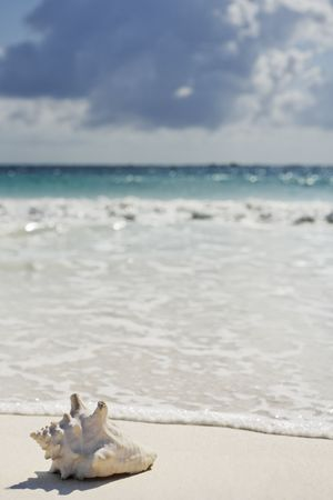 Photo pour view of the beautiful white sand beach of tulum in yucatan mexico with a shell in the foreground  - image libre de droit
