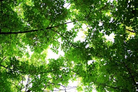 Sunrays Through Leaves