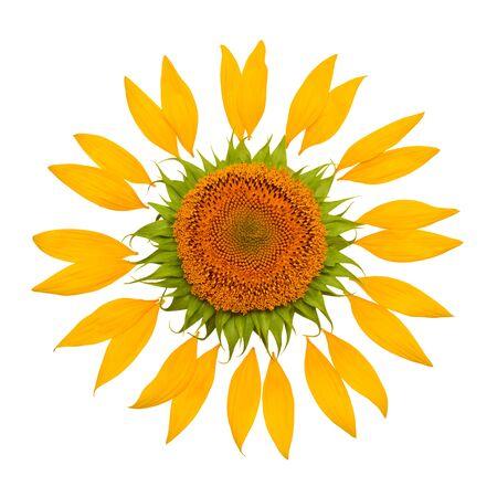 Foto de Creative idea of the sun from a sunflower and petals. Yellow flower and core. Flat lay, top view - Imagen libre de derechos