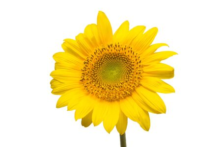 Photo pour Flower of sunflower isolated on white background. Seeds and oil. Flat lay, top view - image libre de droit