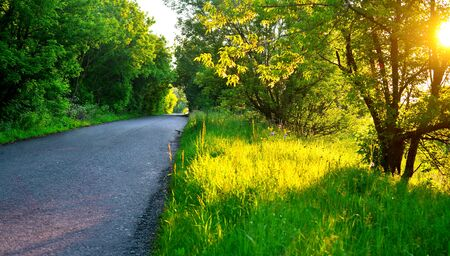Photo pour The road and beautiful trees at sunset. Nature, spring weather. Sun - image libre de droit