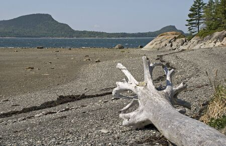 St. Lawrence River shore with dead tree at Le Bic National Park, Quebec, Canada