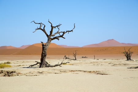 Deadvlei - camel thorn trees