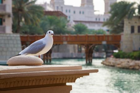 Photo pour White seagull in Madinat Jumeirah - image libre de droit