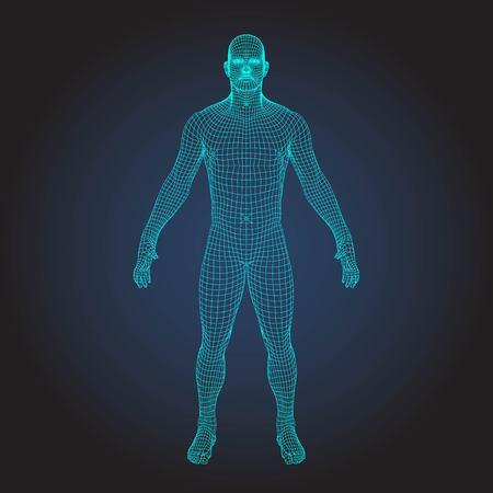 Ilustración de 3D wireframe human body - Imagen libre de derechos