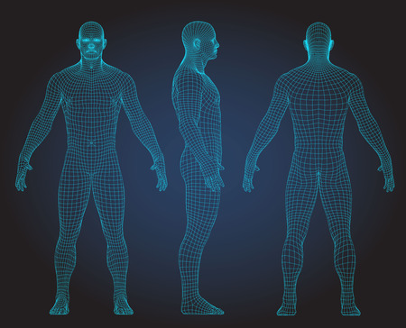Ilustración de Set of 3D wire frame human body vector illustration. Front, Back, Side view - Imagen libre de derechos