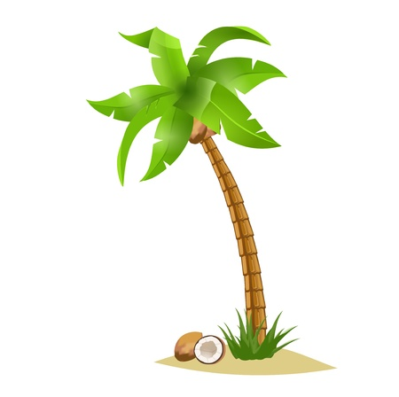 A  bent palm tree width coconuts isolate on white. Summer team.
