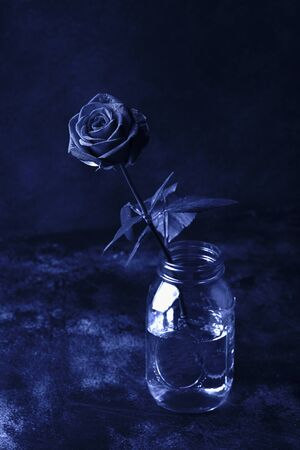 Photo for one red rose on a black background, toned in classic blue color. Trendy color 2020 year - Royalty Free Image
