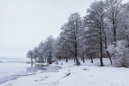 Winter lake and snowcovered trees