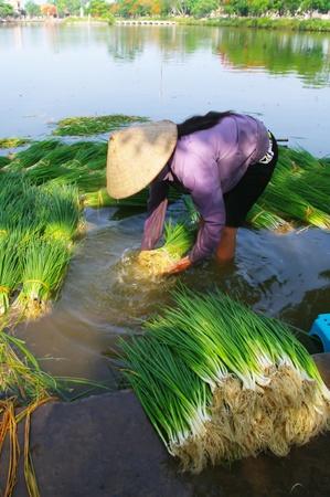 Peasant woman washing vegetables