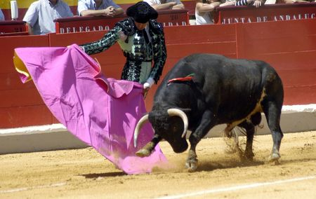 Bullfighting