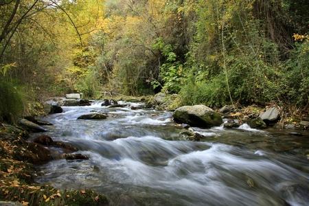 Sierra Nevada forest, river, river Genil