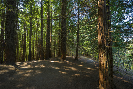 Panoramic view of a redwood forest located in northern Spainの写真素材