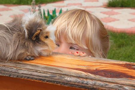 little girl  looking on Guinea pig の写真素材