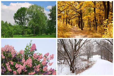 four seasons spring, summer, autumn, winter trees collage with white borders